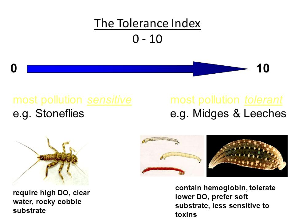 The Tolerance Index 0 - 10 most pollution sensitive e.g.