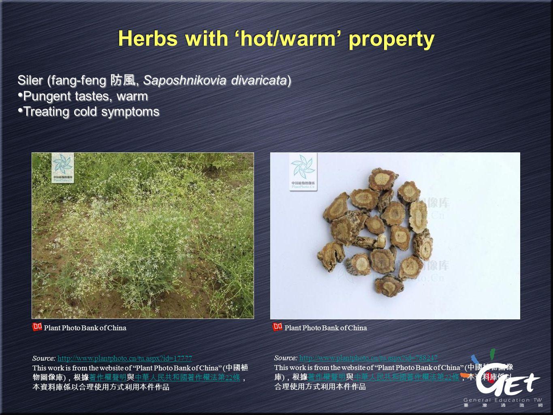 Herbs with 'hot/warm' property Siler (fang-feng 防風, Saposhnikovia divaricata) Pungent tastes, warm Treating cold symptoms Siler (fang-feng 防風, Saposhn
