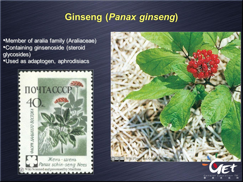 Wiki FloraFarm GmbH / Katharina Lohrie Ginseng (Panax ginseng) Member of aralia family (Araliaceae) Containing ginsenoside (steroid glycosides) Used a