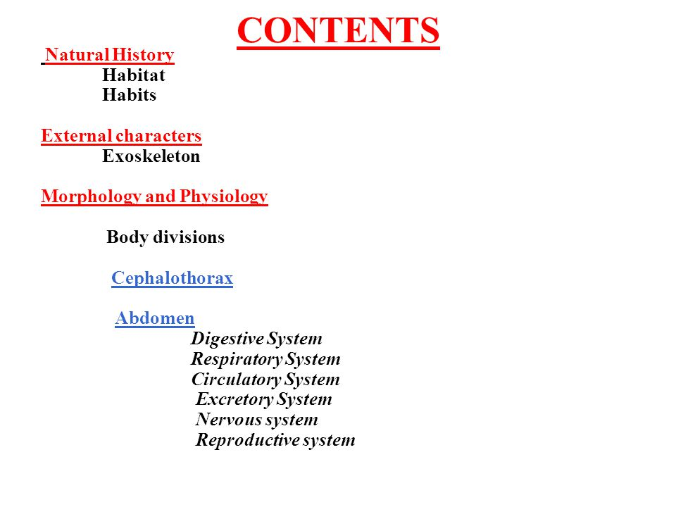 CONTENTS Natural History Habitat Habits External characters Exoskeleton Morphology and Physiology Body divisions Cephalothorax Abdomen Digestive Syste