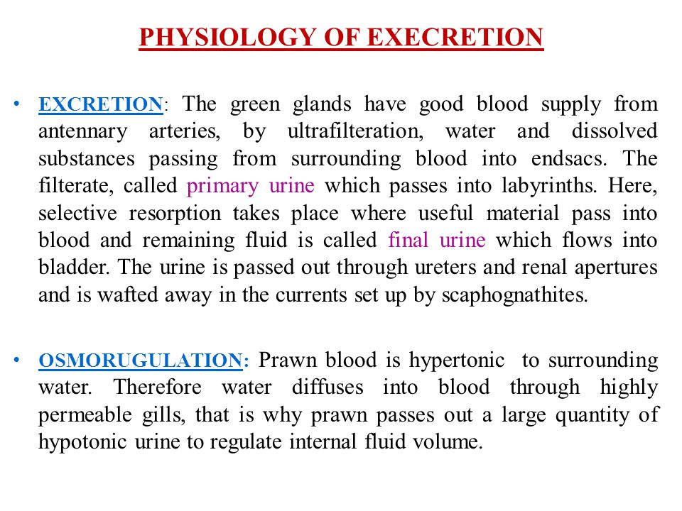 PHYSIOLOGY OF EXECRETION EXCRETION: The green glands have good blood supply from antennary arteries, by ultrafilteration, water and dissolved substanc