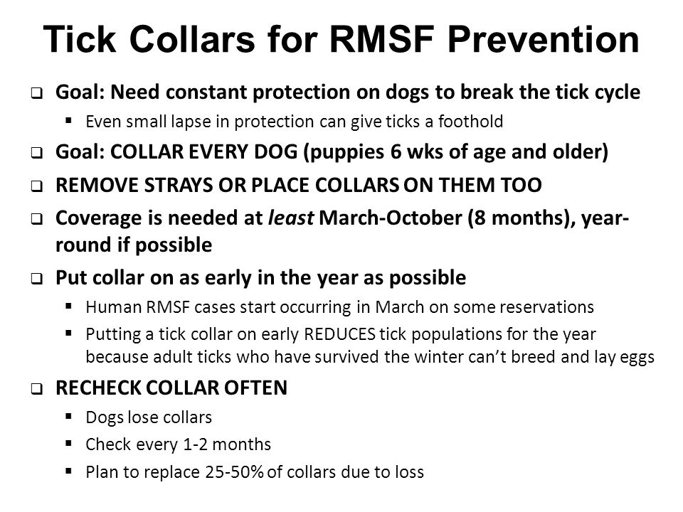 Tick Collars for RMSF Prevention  Goal: Need constant protection on dogs to break the tick cycle  Even small lapse in protection can give ticks a foothold  Goal: COLLAR EVERY DOG (puppies 6 wks of age and older)  REMOVE STRAYS OR PLACE COLLARS ON THEM TOO  Coverage is needed at least March-October (8 months), year- round if possible  Put collar on as early in the year as possible  Human RMSF cases start occurring in March on some reservations  Putting a tick collar on early REDUCES tick populations for the year because adult ticks who have survived the winter can't breed and lay eggs  RECHECK COLLAR OFTEN  Dogs lose collars  Check every 1-2 months  Plan to replace 25-50% of collars due to loss