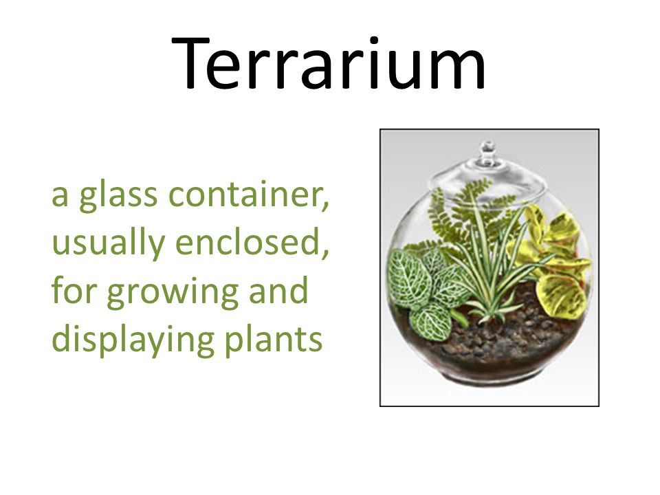 Terrarium a glass container, usually enclosed, for growing and displaying plants