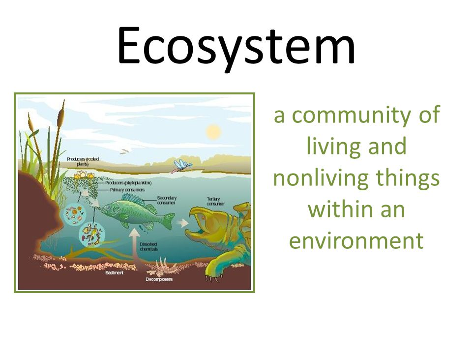 Ecosystem a community of living and nonliving things within an environment