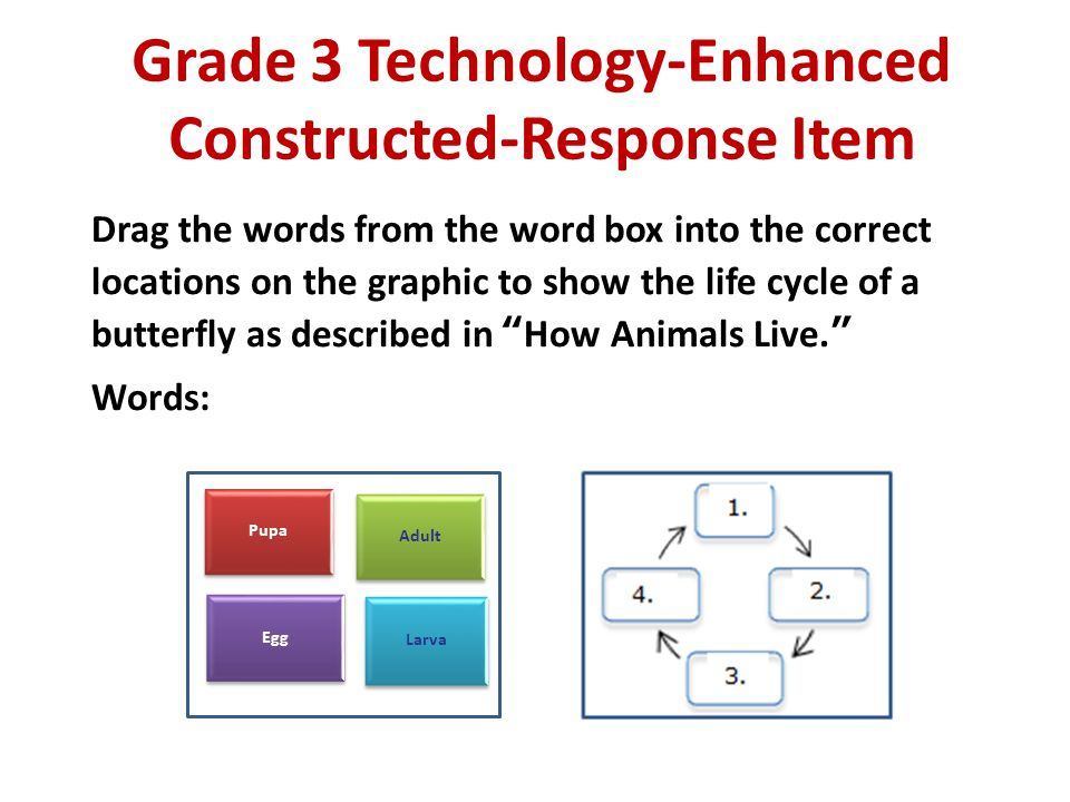 Grade 3 Technology-Enhanced Constructed-Response Item Drag the words from the word box into the correct locations on the graphic to show the life cycl