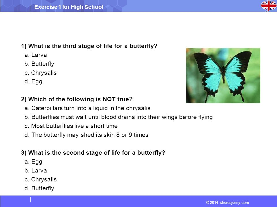 Exercise 1 for High School © 2014 wheresjenny.com 1) What is the third stage of life for a butterfly.
