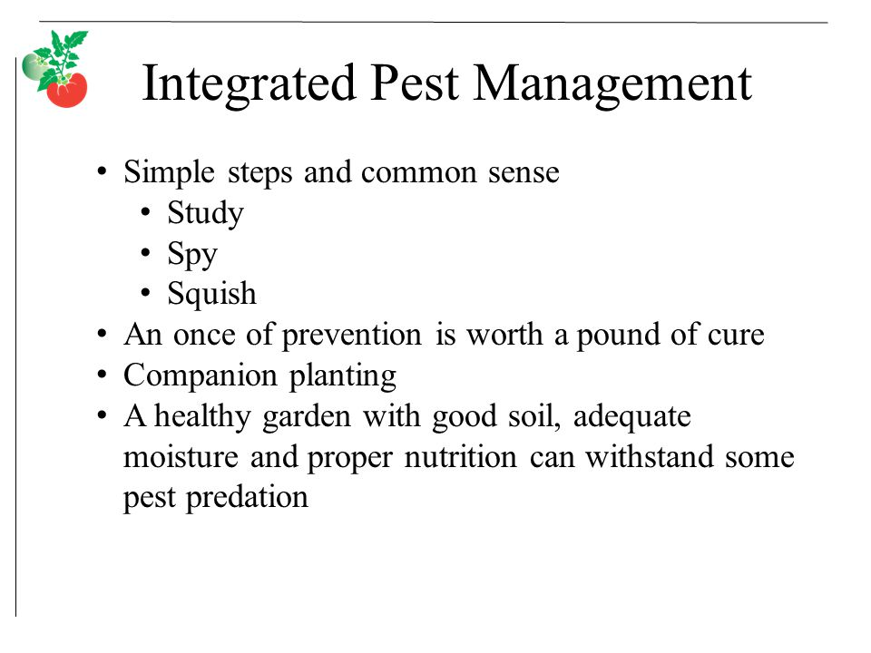 Integrated Pest Management Simple steps and common sense Study Spy Squish An once of prevention is worth a pound of cure Companion planting A healthy garden with good soil, adequate moisture and proper nutrition can withstand some pest predation