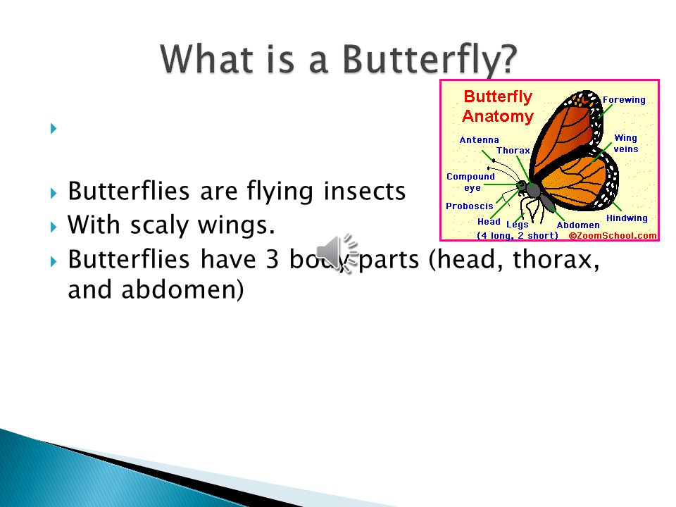  Butterflies are flying insects  With scaly wings.