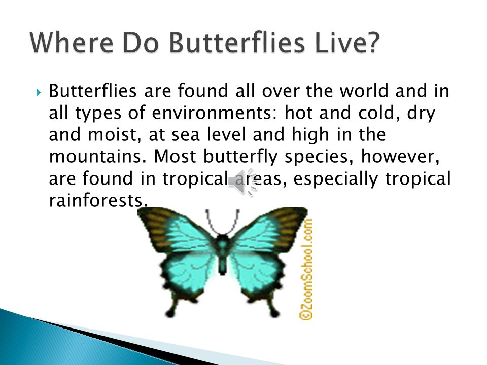  Butterflies are found all over the world and in all types of environments: hot and cold, dry and moist, at sea level and high in the mountains.
