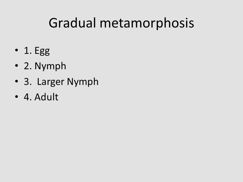 Gradual metamorphosis 1. Egg 2. Nymph 3. Larger Nymph 4. Adult