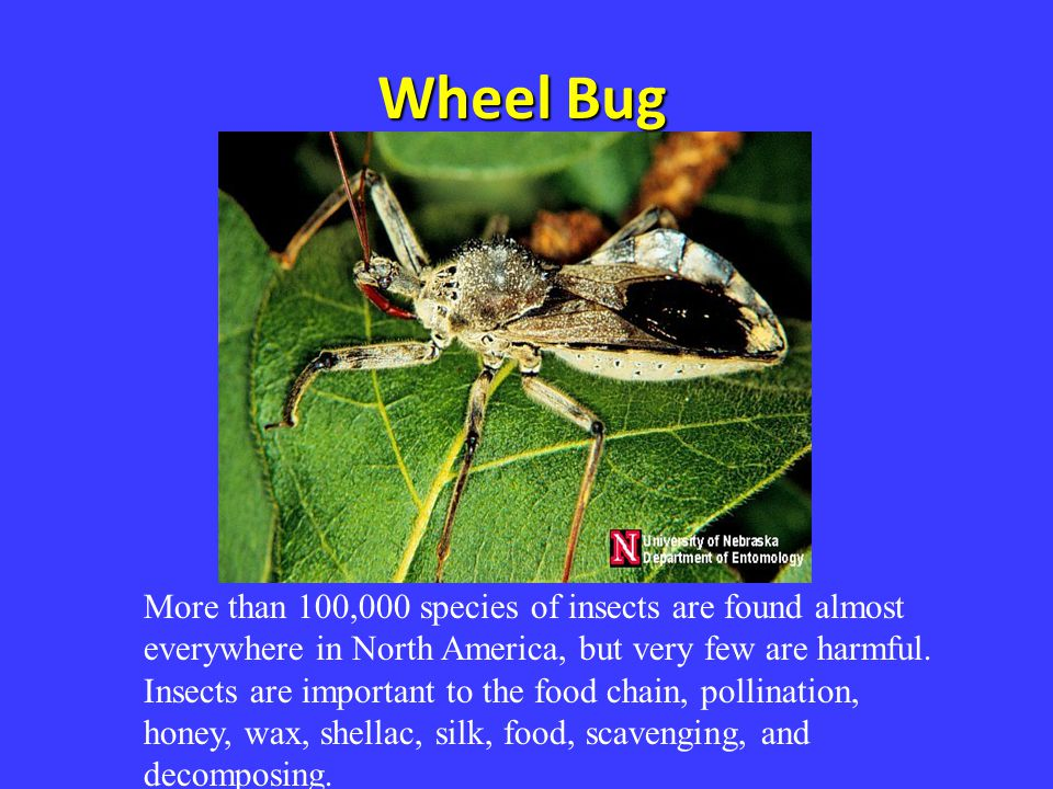 More than 100,000 species of insects are found almost everywhere in North America, but very few are harmful. Insects are important to the food chain,