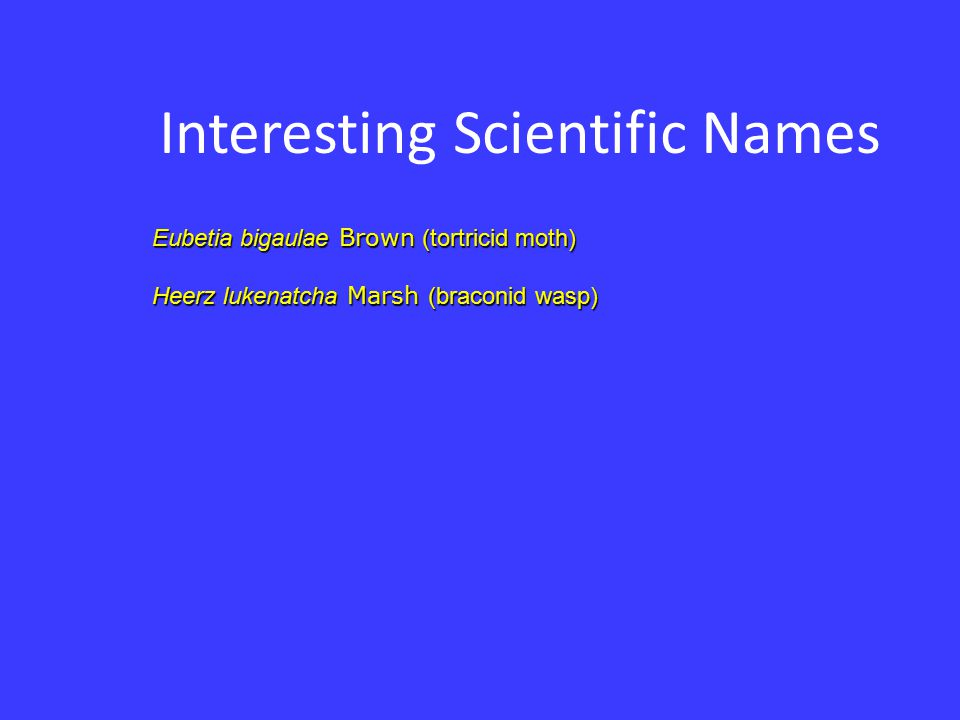 Interesting Scientific Names Eubetia bigaulae Brown (tortricid moth) Heerz lukenatcha Marsh (braconid wasp)