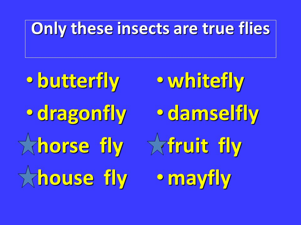 Only these insects are true flies butterfly butterfly dragonfly dragonfly horse fly horse fly house fly house fly whitefly whitefly damselfly damselfl