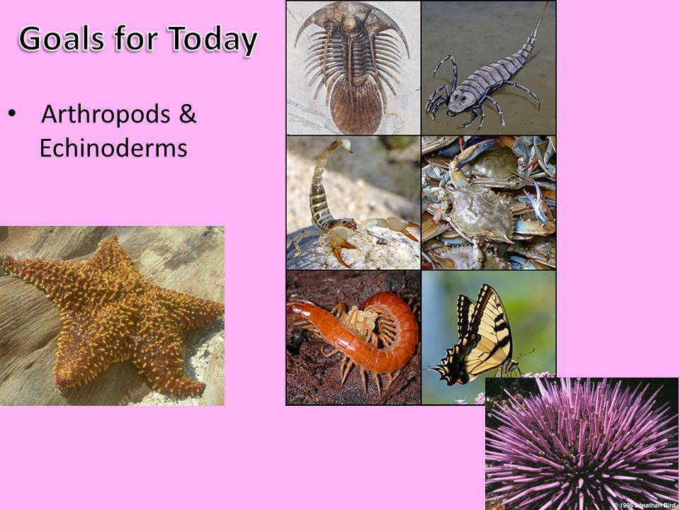 Arthropods & Echinoderms