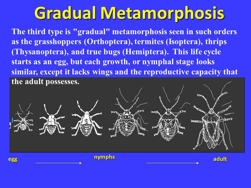 Gradual meta Gradual Metamorphosis egg nymphs adult The third type is