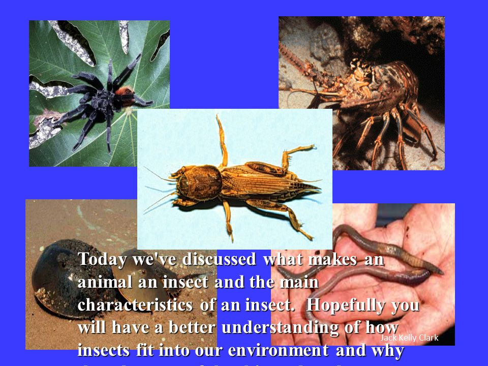 Jack Kelly Clark Today we've discussed what makes an animal an insect and the main characteristics of an insect. Hopefully you will have a better unde
