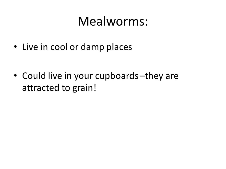 Mealworms: Live in cool or damp places Could live in your cupboards –they are attracted to grain!