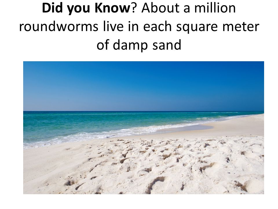 Did you Know? About a million roundworms live in each square meter of damp sand