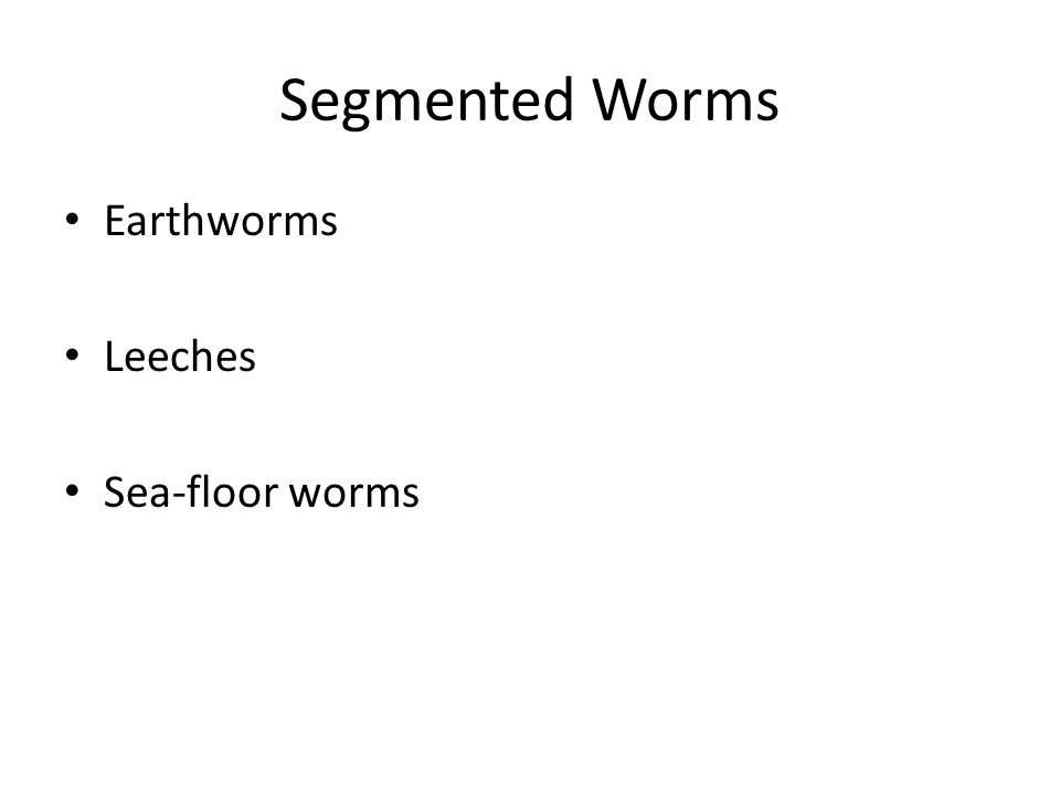 Segmented Worms Earthworms Leeches Sea-floor worms