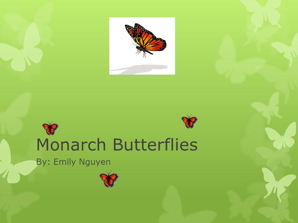 Monarch Butterflies By: Emily Nguyen