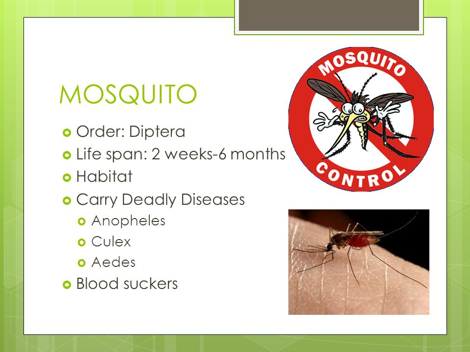 MOSQUITO  Order: Diptera  Life span: 2 weeks-6 months  Habitat  Carry Deadly Diseases  Anopheles  Culex  Aedes  Blood suckers