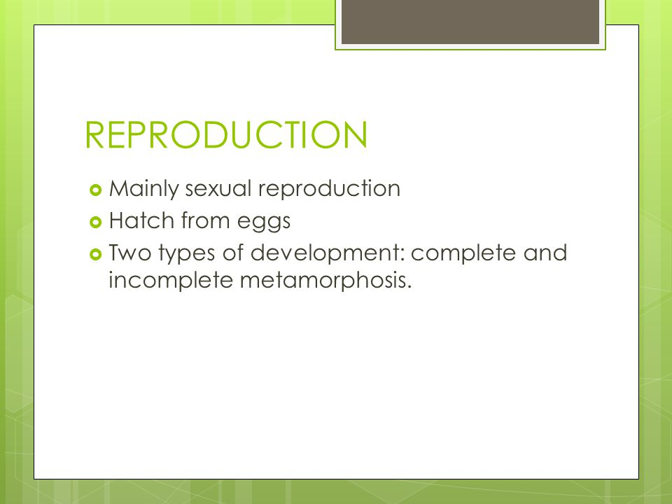 REPRODUCTION  Mainly sexual reproduction  Hatch from eggs  Two types of development: complete and incomplete metamorphosis.
