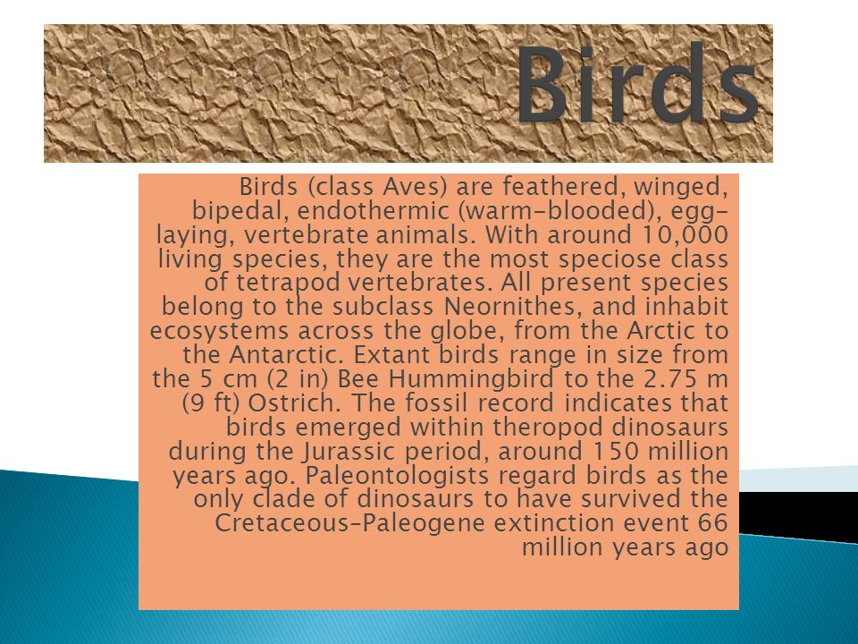 Birds (class Aves) are feathered, winged, bipedal, endothermic (warm-blooded), egg- laying, vertebrate animals.