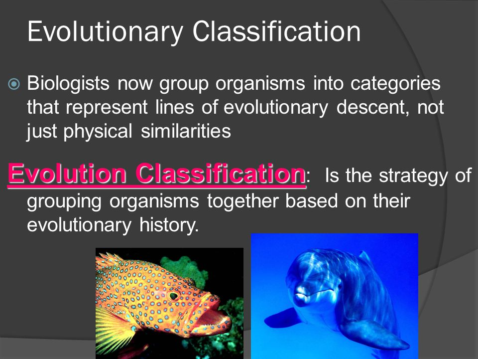 Evolutionary Classification  Biologists now group organisms into categories that represent lines of evolutionary descent, not just physical similarit