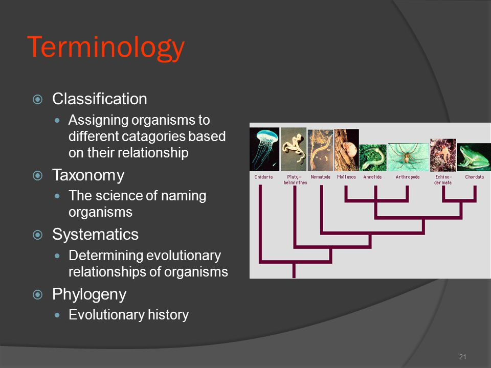 Terminology  Classification Assigning organisms to different catagories based on their relationship  Taxonomy The science of naming organisms  Syst
