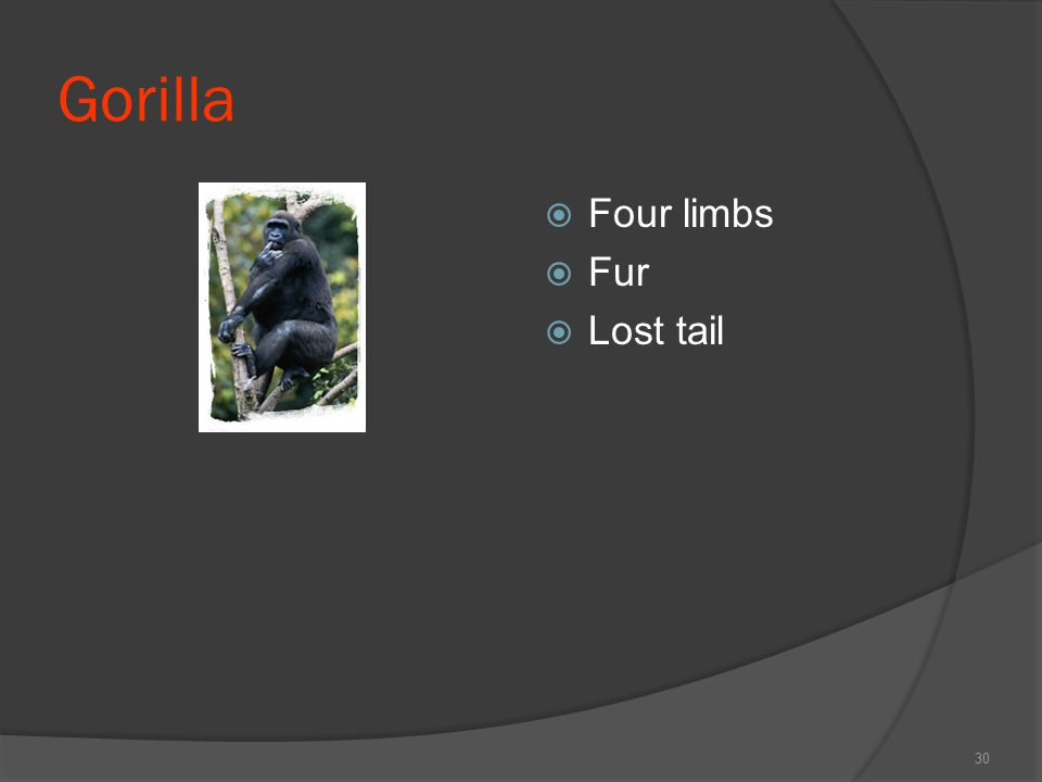 Gorilla  Four limbs  Fur  Lost tail 30