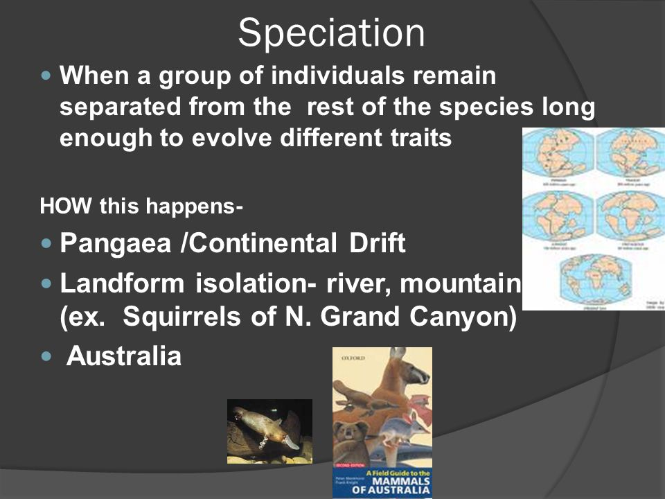 Speciation When a group of individuals remain separated from the rest of the species long enough to evolve different traits HOW this happens- Pangaea