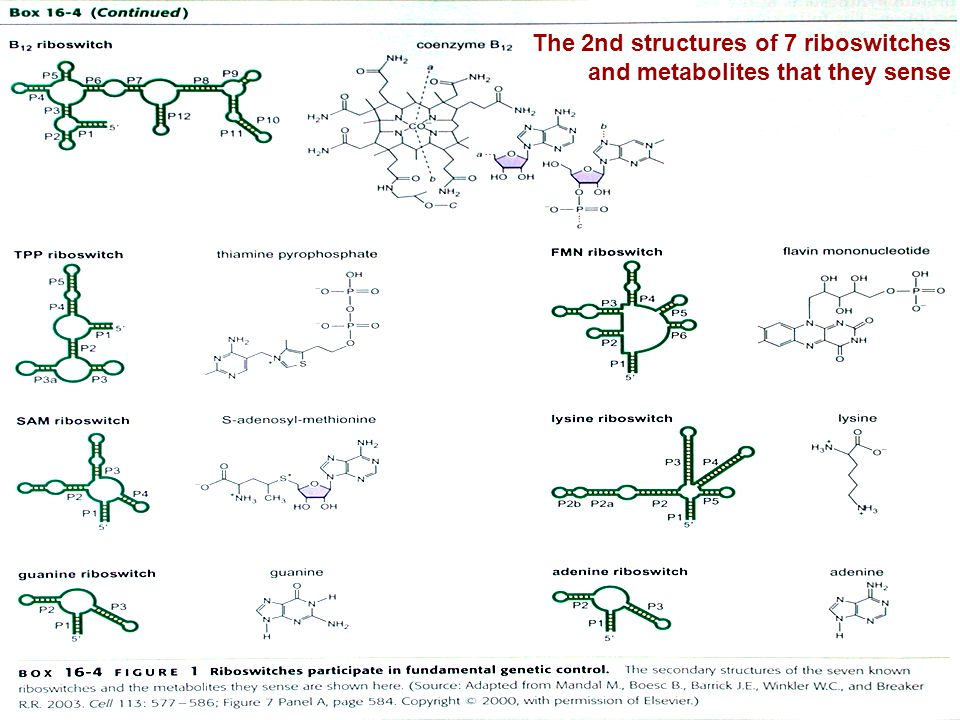 14 The 2nd structures of 7 riboswitches and metabolites that they sense