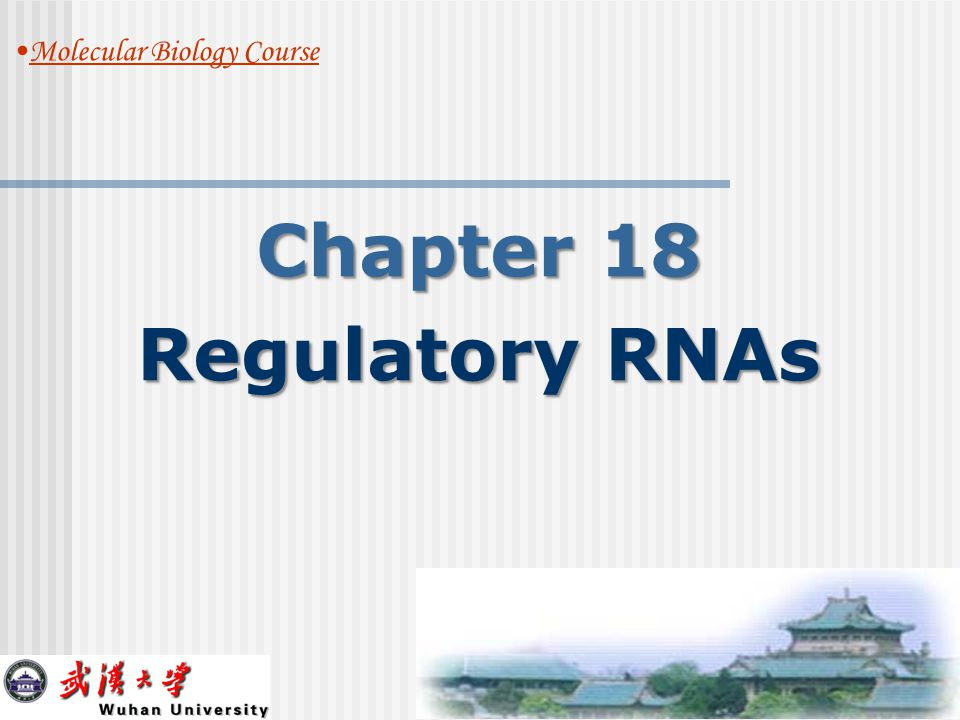 5 TOPIC 1 Regulation by RNAs in Bacteria.