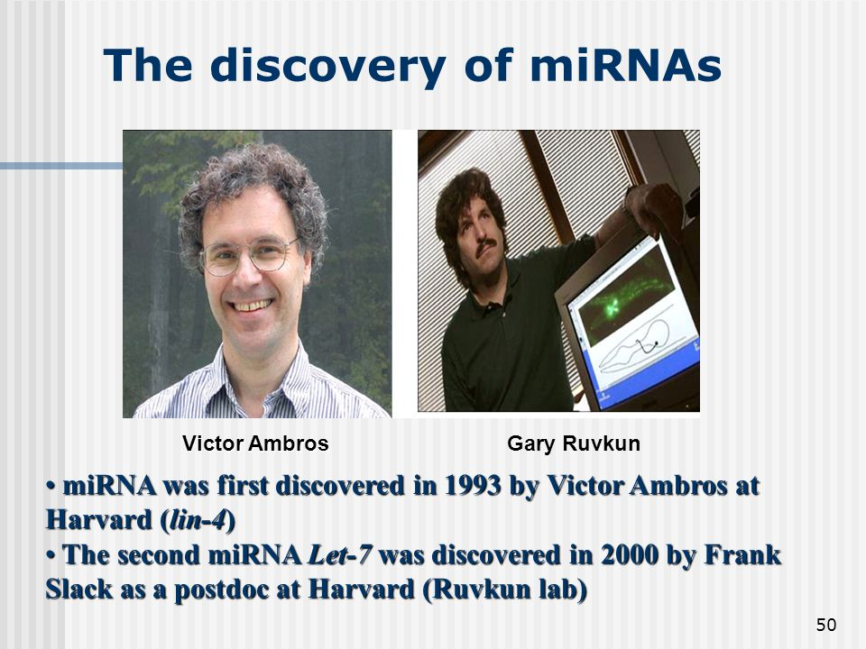 50 The discovery of miRNAs miRNA was first discovered in 1993 by Victor Ambros at Harvard (lin-4) miRNA was first discovered in 1993 by Victor Ambros