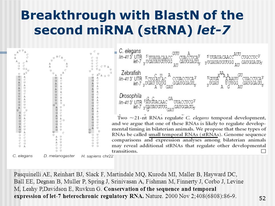 52 Breakthrough with BlastN of the second miRNA (stRNA) let-7 Pasquinelli AE, Reinhart BJ, Slack F, Martindale MQ, Kuroda MI, Maller B, Hayward DC, Ba