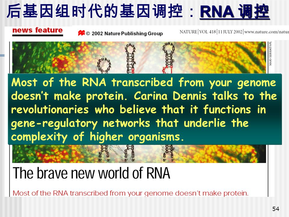 54 RNA 调控 后基因组时代的基因调控: RNA 调控 Most of the RNA transcribed from your genome doesn't make protein. Carina Dennis talks to the revolutionaries who believ