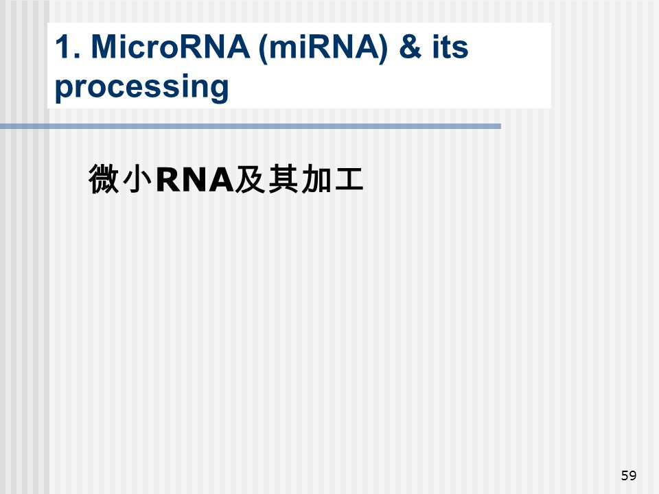 59 1. MicroRNA (miRNA) & its processing 微小 RNA 及其加工