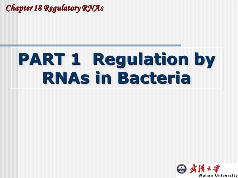 8 1.Small RNAs (sRNA): regulation by base pairing.