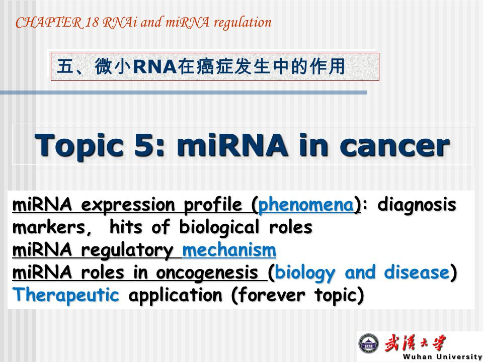 80 Topic 5: miRNA in cancer 五、微小 RNA 在癌症发生中的作用 CHAPTER 18 RNAi and miRNA regulation miRNA expression profile (phenomena): diagnosis markers, hits of b