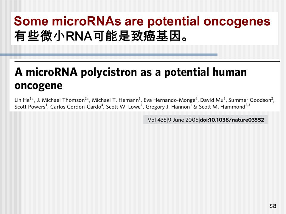 88 Some microRNAs are potential oncogenes 有些微小 RNA 可能是致癌基因。