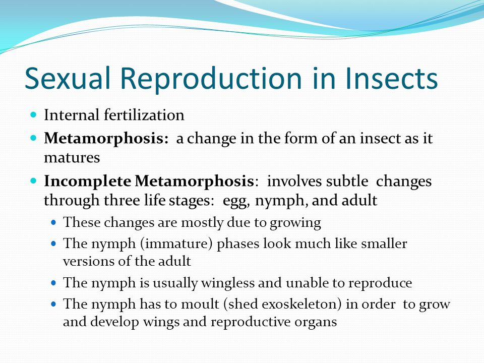 Sexual Reproduction in Insects Internal fertilization Metamorphosis: a change in the form of an insect as it matures Incomplete Metamorphosis: involve