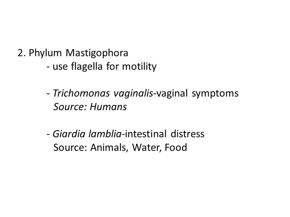 2. Phylum Mastigophora - use flagella for motility - Trichomonas vaginalis-vaginal symptoms Source: Humans - Giardia lamblia-intestinal distress Sourc