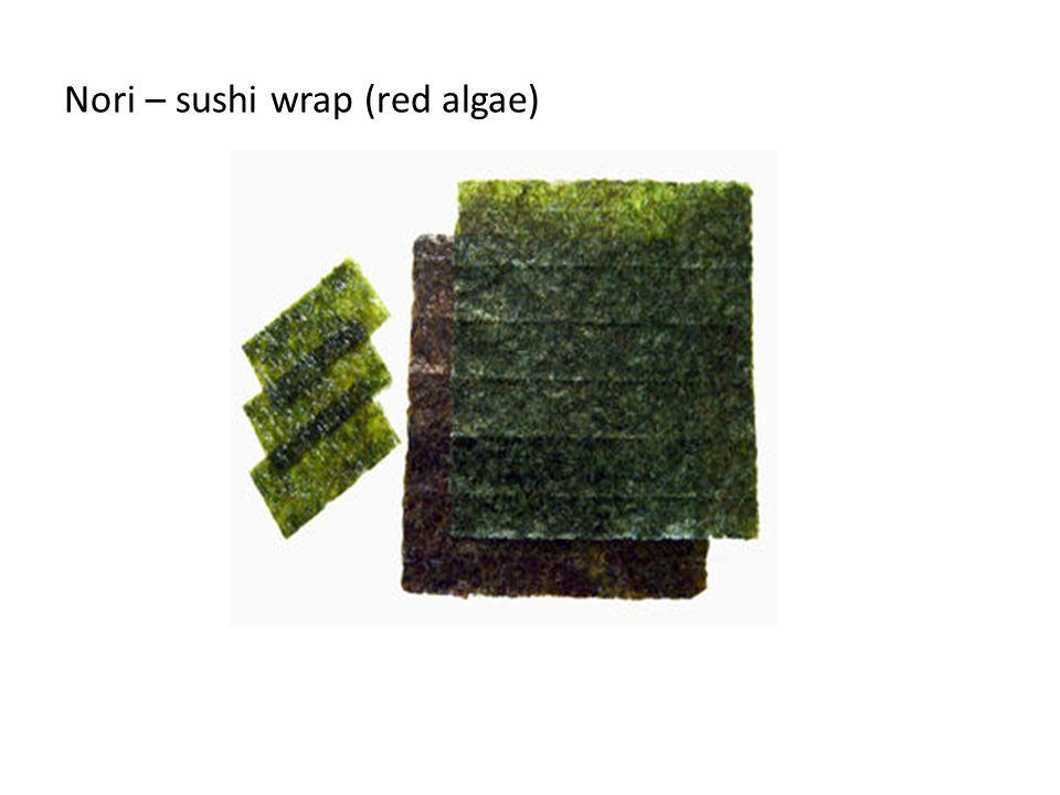 Nori – sushi wrap (red algae)