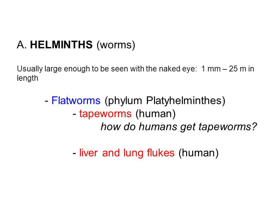 A. HELMINTHS (worms) Usually large enough to be seen with the naked eye: 1 mm – 25 m in length - Flatworms (phylum Platyhelminthes) - tapeworms (human