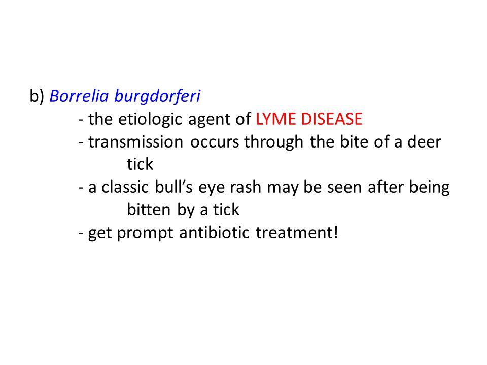 b) Borrelia burgdorferi - the etiologic agent of LYME DISEASE - transmission occurs through the bite of a deer tick - a classic bull's eye rash may be