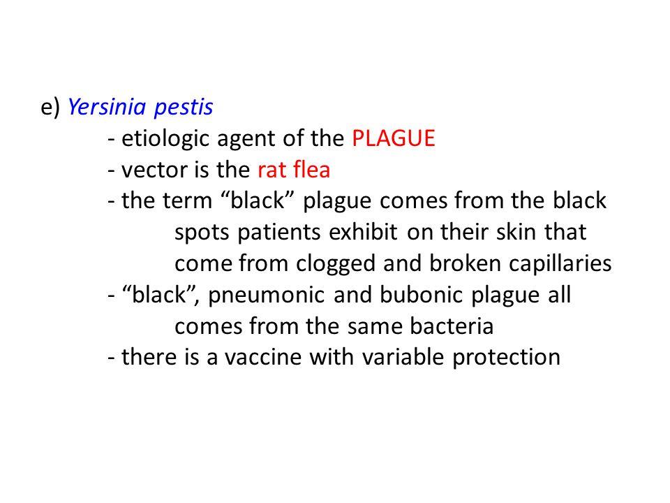 "e) Yersinia pestis - etiologic agent of the PLAGUE - vector is the rat flea - the term ""black"" plague comes from the black spots patients exhibit on t"