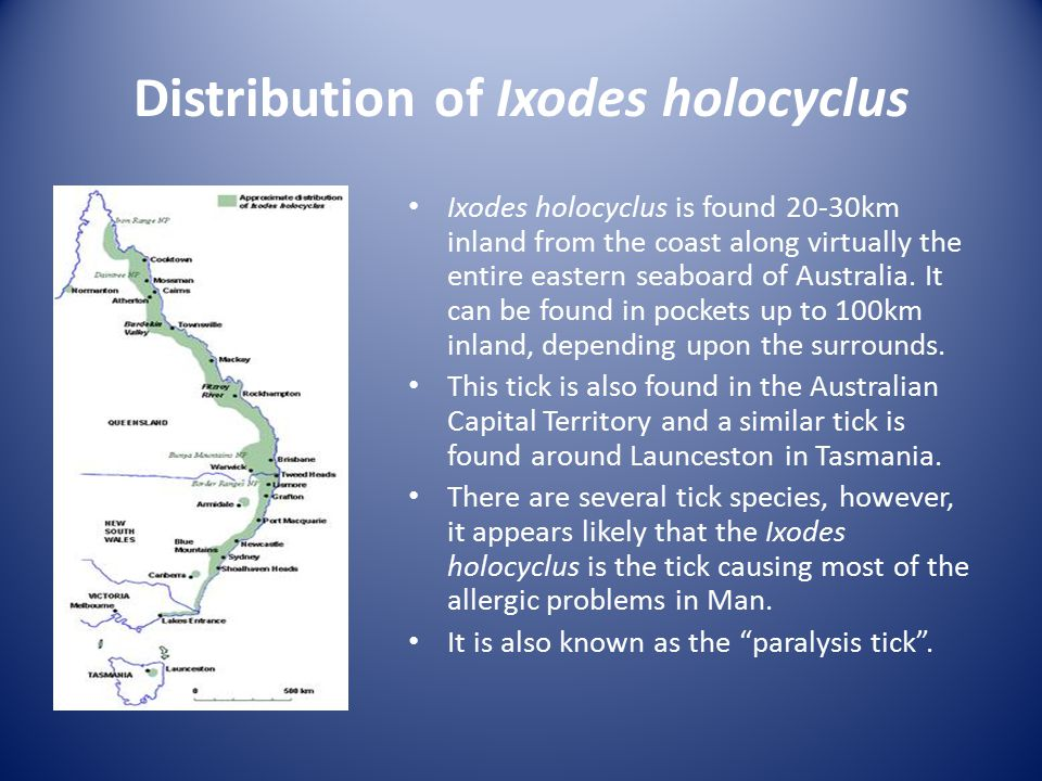 Distribution of Ixodes holocyclus Ixodes holocyclus is found 20-30km inland from the coast along virtually the entire eastern seaboard of Australia. I