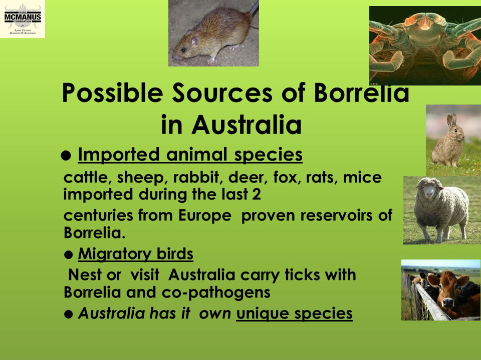 B.burgdorferi imported into Australia.