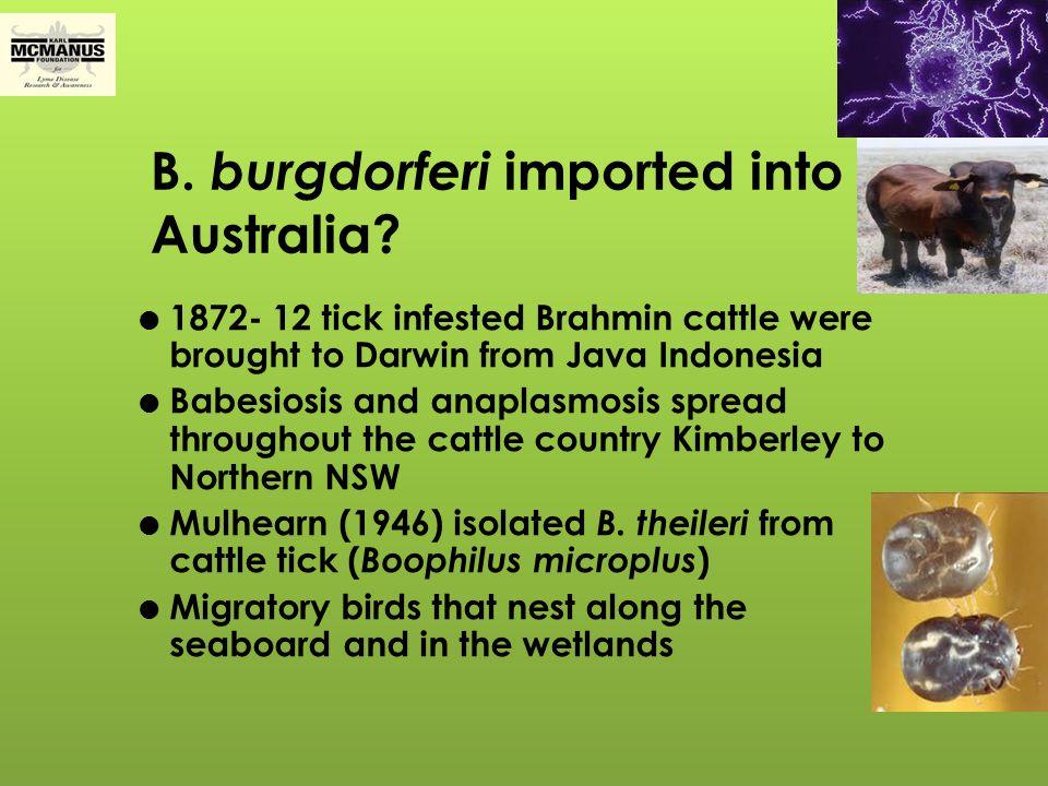 Borrelia In Australia  Indigenous Borrelia genospecies in Australia- very high probability.