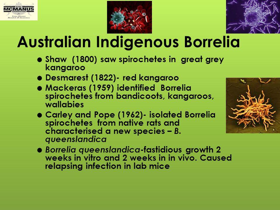 Common Ticks in Australia